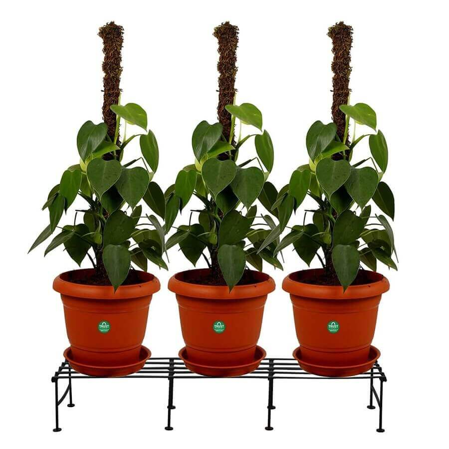 Gardening tools - 10+ Essential Terrace Gardening tools to create a Garden of your dreams - Planter Stands TrustBasket Indigo Single layer Planter Stand 1