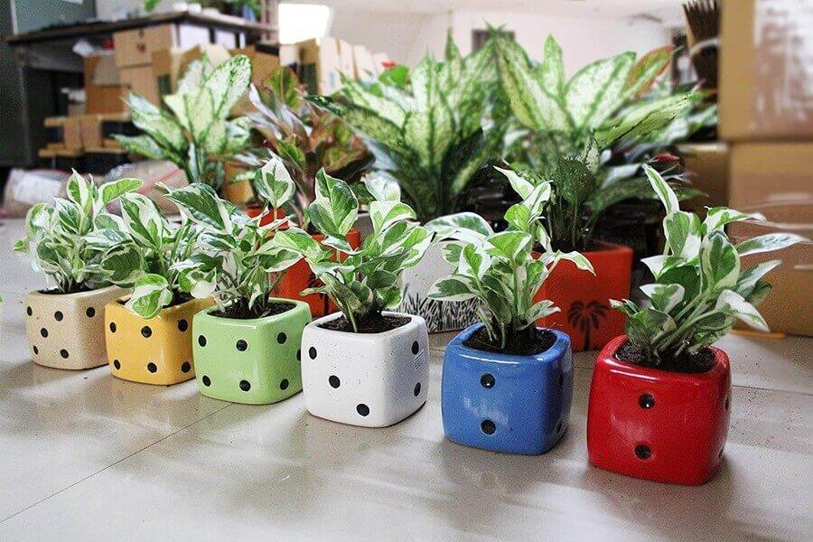 Soul of Gardening - Plants