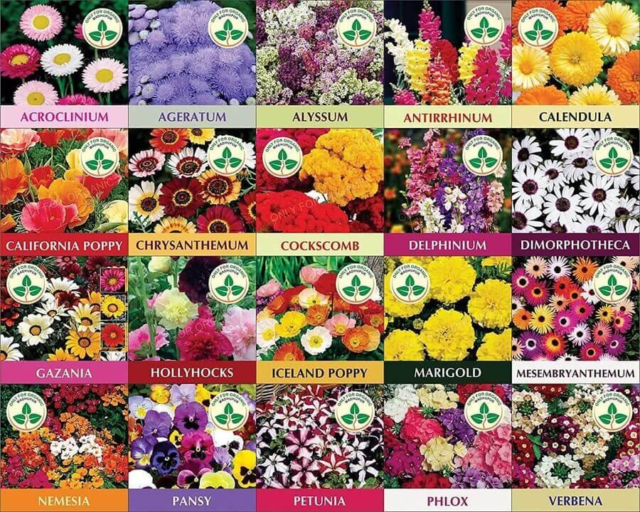 Soul of Gardening - Flower Plant Seeds